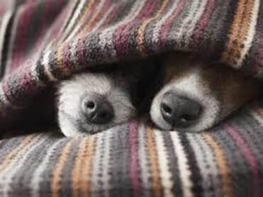 two cold dogs hiding under blanket